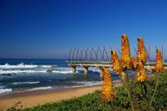 Image shared by Tamaryn Szamosvari. Find images and videos about south africa and durban on We Heart It - the app to get lost in what you love. I Am An African, Seaside Towns, Continents, Find Image, South Africa, World, Beach, Creative, February