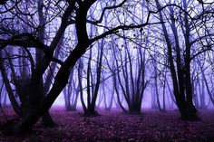 Browse Purple pictures, photos, images, GIFs, and videos on Photobucket Purple Love, All Things Purple, Deep Purple, I Look To You, Cool Pictures, Cool Photos, Mazzy Star, Prince Purple Rain, Tree Art