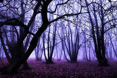 It´s time for purple rain
