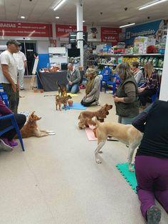 #taller #olfativo #perros #adiestramiento #canino En totdanimals.com  telf965870797
