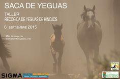 Taller recogida Yeguas Hinojos - http://www.aefona.org/taller-recogida-yeguas-hinojos/