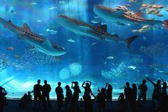 沖縄美ら海水族館 / Okinawa Churaumi Aquarium