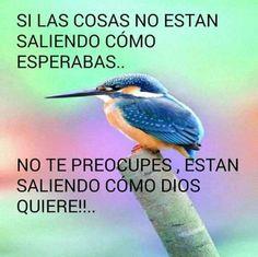 Si las cosas no están saliendo como esperabas... no te preocupes, están saliendo como Dios quiere!