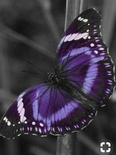 Onet Butterfly - Challenge your mind! Butterfly Games, Butterfly Kisses, Purple Butterfly, Butterfly Art, Beautiful Bugs, Beautiful Butterflies, Beautiful Flowers, Beautiful Pictures, Butterfly Painting