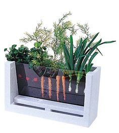 Watch your veggies grow! (A great way to teach kids how vegetables grow)–and maybe an old fish tank could be used, too!