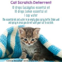 How to Stop Cats From Scratching Furniture With a Home Remedy Spray