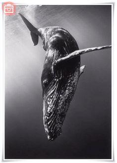 Foto del día: Animales marinos