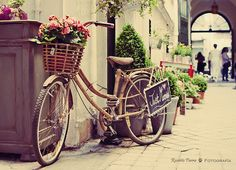 bike, cute, flowers