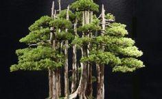 El mundo de los bonsais: http://wakan.org/mundo-del-bonsai/