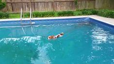 Papillon Aquatic Training https://youtu.be/rhamvKGfSGM