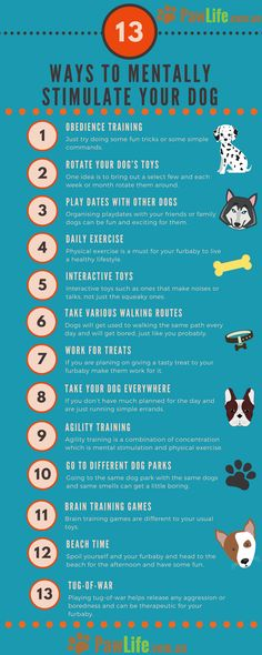 There are many ways to mentally stimulate your dog each and every day. We all know that our furbaby's need physical exercise every day.