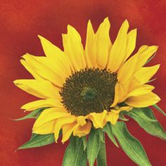 Check out the deal on Sunflower Style Plates at Party at Lewis Elegant Party Supplies, Plastic Dinnerware, Paper Plates and Napkins Sunflower Kitchen Decor, Plastic Dinnerware, Party World, Beverage Napkins, Party Tableware, Autumn Theme, Party Themes, Party Ideas, Fall Decor