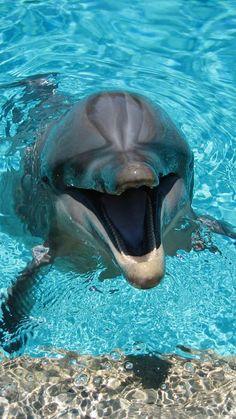Bottlenose Dolphin Wallpaper Dolphins Animals Wallpapers) – Wallpapers For Desktop Dolphin Photos, Dolphin Art, Tier Wallpaper, Animal Wallpaper, Seagrass Wallpaper, Paintable Wallpaper, Emoji Wallpaper, Colorful Wallpaper, Fabric Wallpaper