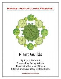 Free downloadable Plant Guilds eBook from Midwest #Permaculture. Includes lots of ideas for incorporating #fruit into your design. Lots of other learning resources at this site. Great to see some info geared to the Midwest/northern United States!