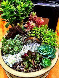 Miniature Succulent Dish Garden