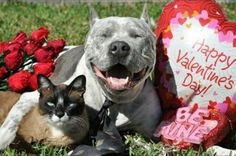 TOMORROW! Two great things happening at the shelter! $15 microchips AND 1/2 price adoptions for all animals over 1 year of age. #HappyValentinesDay