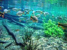 Bonito - Peixes 07
