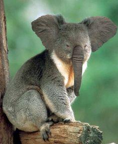 30 Amazing Animal Manipulations