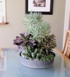 living arrangements: los angeles « HAUTE NATURE