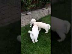 Købe en hundehvalp - tips og råd. Hundeudstyr - Køb online