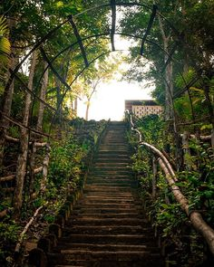 This is the only way to go to the motorway from the cottage in the riverbank where I was staying. This was my stairway to heaven at the time. Never regret it tho. . Follow me @patrick.jarina . #cleanair #lovenature #O2 #forrestpark #foresthill #bestday #trees #forests #love #forestgreen #forest #hike #lifeinism #walking #hill #lovedit #forrestyoga #forestry #tree #best #hiking #walk #foresthills #naturelover #hikingtrail #relaxing #walkingaround #forestpark #relax #nature Forest Hill, Forest Park, Tree Forest, Tree Wallpaper Living Room, Diy Cat Tree, Cool Christmas Trees, Tree Photography, Stairway To Heaven, Tree Silhouette