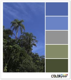 Cocopalm, Colors, Coloryear
