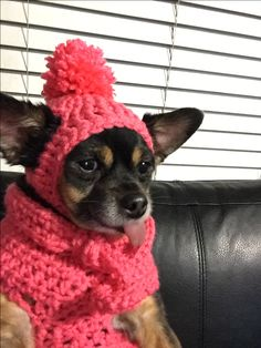 Small dog hat and sweater