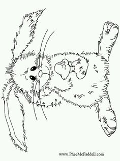Phee McFaddell Artist Cute Bunny Free Coloring Page
