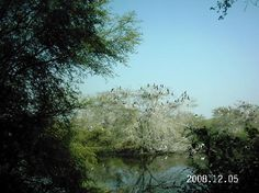 Bharatpur Bird Sanctuary  Keoladeo Ghana Natiuonal Park, Bharatpur, India - View by rickshaw