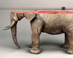 Imprimiendo Especies en Peligro de Extinción en 3D