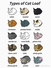 'The Types of Cat Loaf' T-Shirt by usclaireforce – Cat Supplies Funny Cat Memes, Funny Cat Videos, Funny Cats, Funny Animals, Cute Animals, Types Of Animals, Anime Animals, Cat Memes Clean, Thing 1