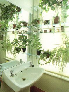 if you're fortunate enough to have a bright window in your bathroom, fill it with cute plants