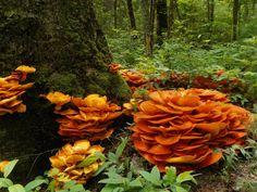 Amazing mushrooms by Betty Whetzel, Great Smoky Mountains National Park