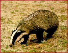 Asturias: Fauna autoctona de Asturias