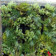 Grow up! Vertical gardening adds another dimension to your indoor or outdoor growing spaces.
