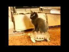 Funny Fails Cats Compilation 2014 Funny Cats Compilation 2014 Top funny cats dog video funny crazy http://www.youtube.com/watch?v=SBilXZSx68U
