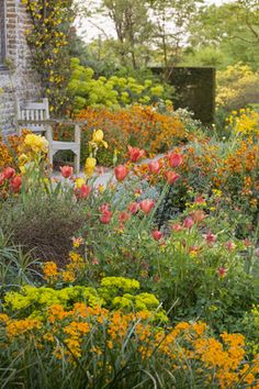 Tulips, wallflowers and euphorbia in the Cottage Garde at Sissinghurst Castle, Kent, UK