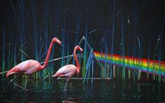 Pink Floyd Art | EgFox Pink Floyd vision by ~Eg-Art on deviantART