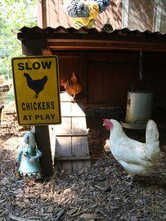 Chickens at Play: Fun Chicken Coop Ideas --> http://www.hgtvgardens.com/chickens/backyard-chicken-coop-ideas?s=23&?soc=pinterest