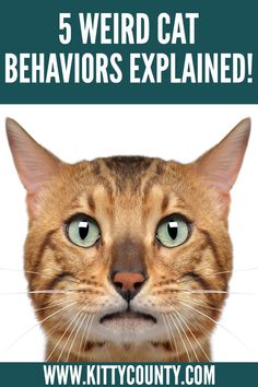 We have seen cats making weird faces haven't we? But that's not where their weirdness stops. Check out the top 5 weird cat behaviors that most cats often express and what they mean. #weirdcat #cutecatface #weirdcatbehaviors #catcare