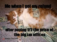 Find the wonderful fat cat memes funny - hilarious pets pictures Fat Animals, Funny Animals, Adorable Animals, Funny Animal Pictures, Best Funny Pictures, Funny Cute, Hilarious, Fat Cats, Fat Kitty