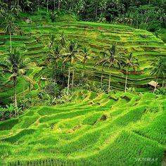 Bali  Photo by @rolaotnd_lim