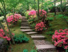 Plantar azalees i/o rododendrons (recordar que necessitaré terra àcida)