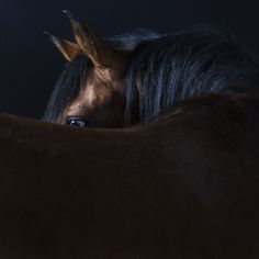 Intimate Animal Portraits Capture Unique Quirks and Personalities of Cats, Dogs, and Horses - My Modern Met