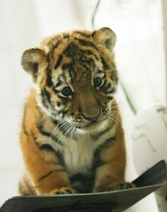 Baby Animals Looking Sad | Cutest Paw