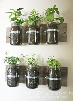 Mason Jar Wall Planter. Very pretty!