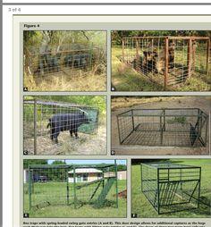18 best hog trap images hog trap hog hunting architecture rh pinterest com