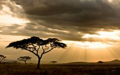 """""""Away, away, from men and towns, to the wild wood and the downs, to the silent wilderness, where the soul need not repress - its music."""" - Percy Bysshe Shelley (Acacia trees at sunset on the Serengeti)"""