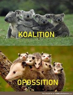 58 Of Today's Best Pics And Memes – Humor bilder Funny Animal Videos, Animal Memes, Funny Animals, Cute Animals, Funny Videos, Funny Meme Pictures, Funny Images, Cool Pictures, Random Pictures