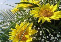 Imagini pentru flori de august imagini Plant